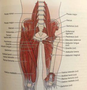 ragioni per il dolore osseo pubico
